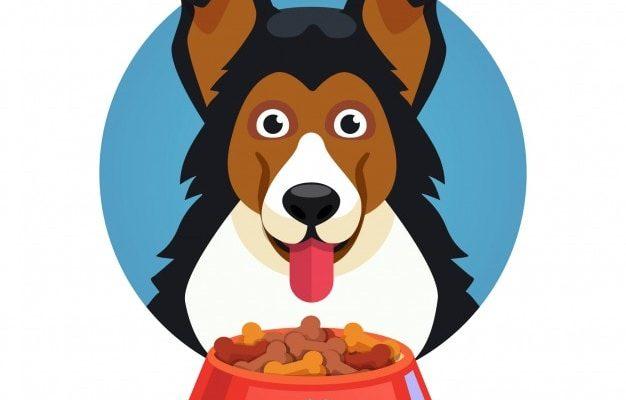 hunde må ikke spise